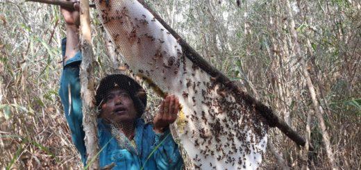 gác kèo ong